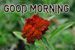 Latest Free Good Morning Wishes Images  Pictures With Flower