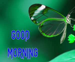 Latest Free Good Morning Wishes Images Pics Download