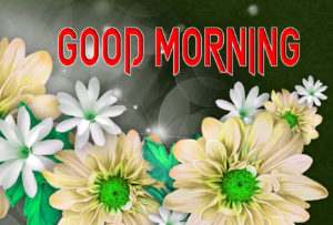 Latest Free Good Morning Wishes Images Pictures Pic New