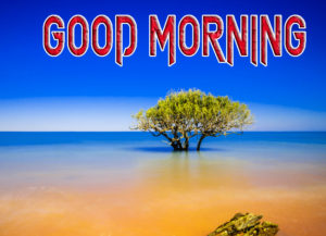 Latest Free Good Morning Wishes Images pics Free for Facebook