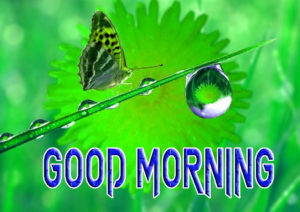 Latest Free Good Morning Wishes Images Pictures Photo Download