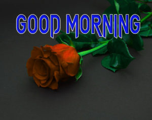 Latest Free Good Morning Wishes Images Wallpaper for Whatsapp