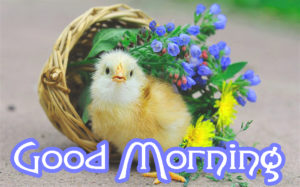 Good Morning Wishes Pics Wallpaper Pics Download