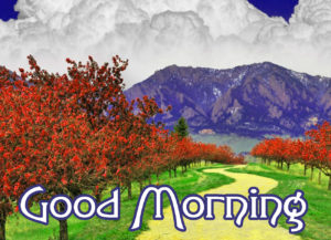 Good Morning Wishes Pics Wallpaper Pics Latest Free Download
