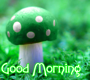 Good MorningWishes Pics Wallpaper Download & Share With friend