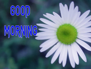 Latest Free Good Morning Wishes Images Pics for Facebook