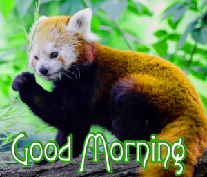 Good MorningWishes Pics Wallpaper Pics for Whatsapp