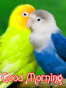 Good Morning Images Wallpaper Pics Download & Share