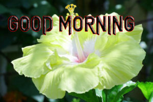 Latest Free Good Morning Wishes Images Pictures