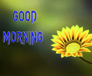 Latest Free Good Morning Wishes Images Pictures HD Download
