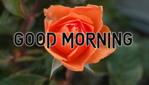 Sister Good Morning Images  picture photo download