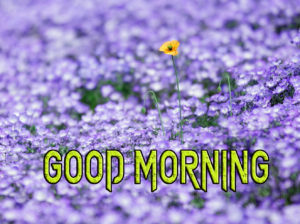 Latest Free Good Morning Wishes Images Pics Latest Free