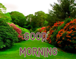 Latest Free Good Morning Wishes Images Pics Wallpaper for Best Friend