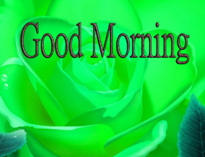 Latest Free Good Morning Wishes Images Wallpaper Download