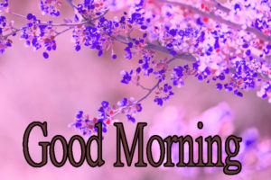 Latest Free Good Morning Wishes Images Pics Wallpaper for Facebook