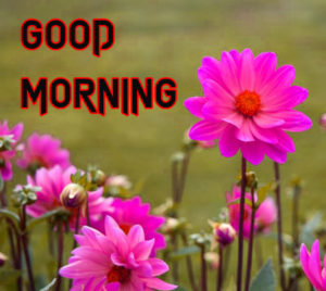 Good Morning Images Pics With Flower