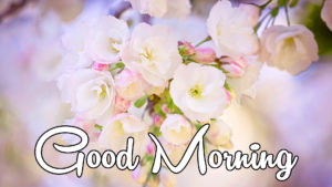 Latest Free Good Morning Wishes Images wallpaper photo hd