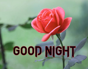 Good Night Photo HD Images Pictures With Rose