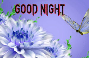 Good Night Photo HD Images Wallpaper Pics Download