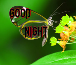 Good Night Photo HD Images Photo Free Download