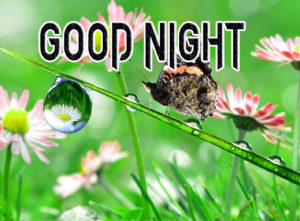 Good Night Photo HD Images Pic for Facebook
