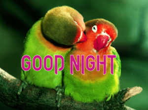 Good Night Photo HD Images Pics Photo Download