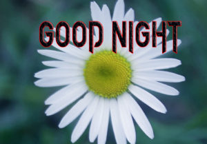 Good Night Photo HD Images Pics Wallpaper Download