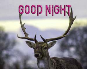 Good Night Photo HD Images Photo Pics Download