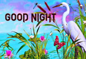 Good Night Photo HD Images Pics HD Download