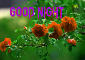 Good Night Photo HD Images Pics Wallpaper for girlfriend