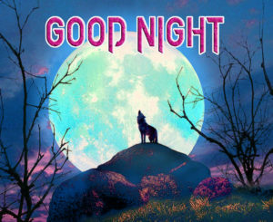 Good Night Photo HD Images Pics Wallpaper