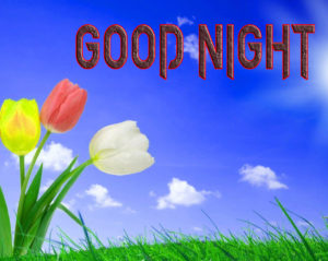 Good Night Photo HD Images Pics Download & Share