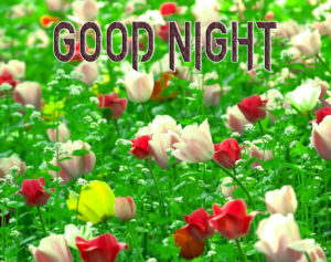 Good Night Photo HD Images Pics Free Download