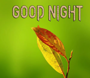 Good Night Photo HD Images Pic Wallpaper Download