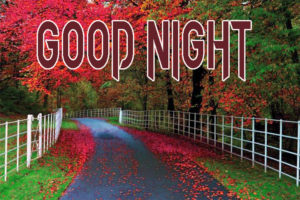 Good Night Images Pics Wallpaper With Nature