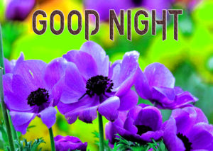 Good Night Images Pics Wallpaper for Facebook
