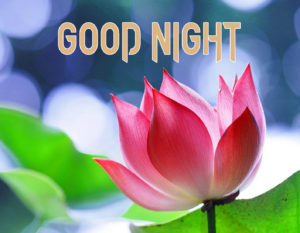 Good Night Images Wallpaper HD Download & Share