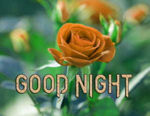 Good Night Images Pics Photo With Red Rose
