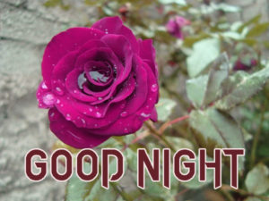 Good Night Images Wallpaper With Rose