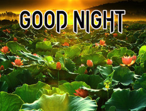 Good Night Images pictures Free new