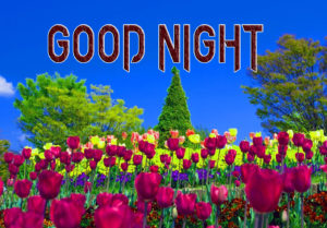 Good Night Images Pic for Facebook