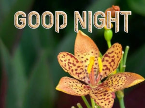 Good Night Images Pictures for Facebook