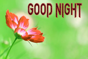 Good Night Images Photo Download In HD For friend