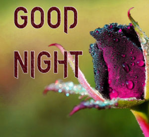 Good Night Images Pics Pictures Free Download