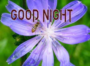 Good Night Images Photo for Facebook Profile Pics