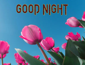 Good Night Images Wallpaper Pics free Download
