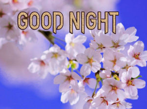 Good Night Images Pics Wallpaper Free Download & Share