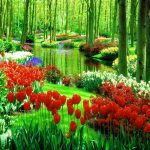 752+ Beautiful nature images Wallpaper Pics for Download for Mobile