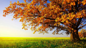 Beautiful nature images pictures pics free hd download