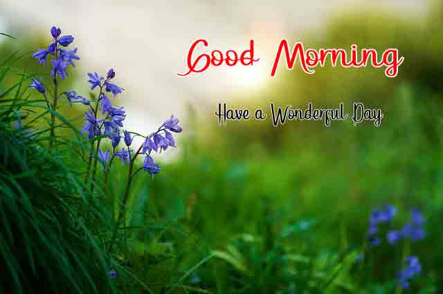 Good Morning Wishes for Lover images hd